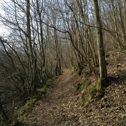 Sentiero tra i castagni