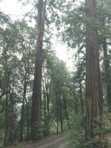 alberirifatta