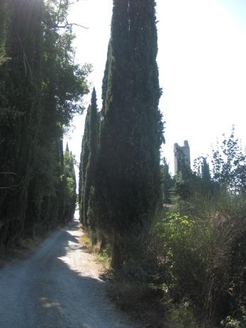 Romena i ruderi del castello tra filari di cipressi