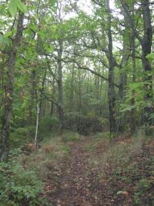 Il primo tratto del sentiero tra boschi di castagno e un morbido tappeto di foglie