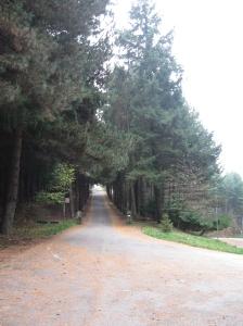 Il viale alberato che porta al monastero