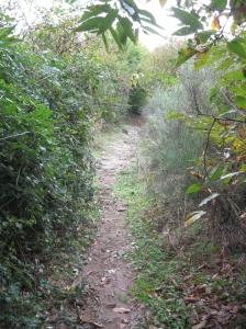 Il sentiero in salita