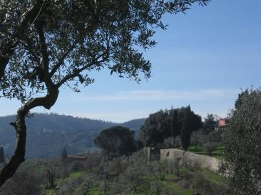 Carmignano, i muri di recinzione della rocca nel verde paesaggio a olivi