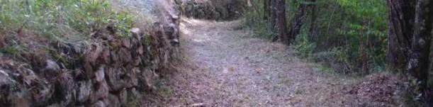 Uno scorcio del sentiero