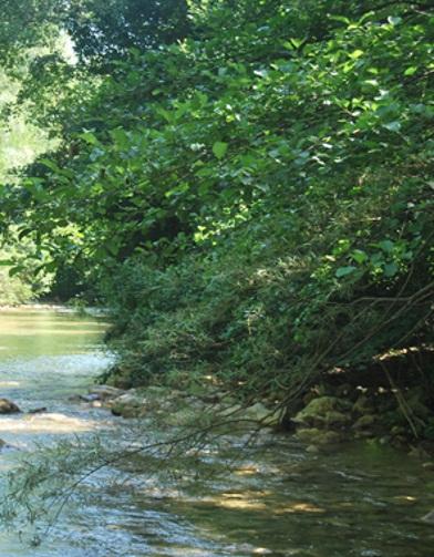 Il fiume Merse