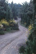La via Maremmana