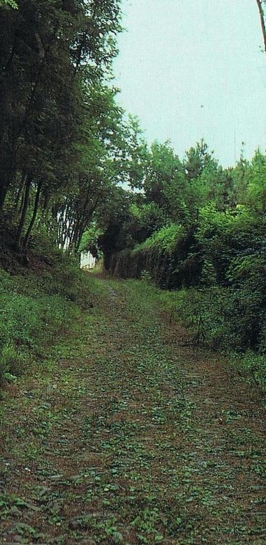 La via Francigena a Galleno, Firenze