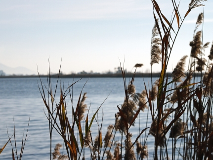 Massaciuccoli, il lago