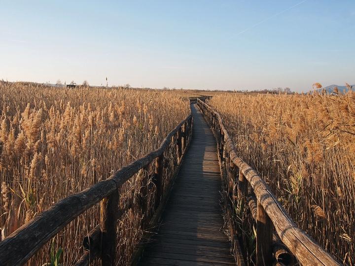 Nel lago lungo la passerella della Lipu