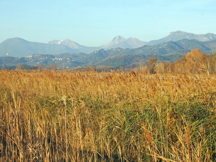 Le Alpi Apuane dal lago di Massaciuccoli